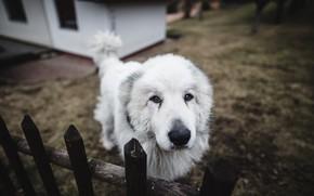 Обои друг, забор, собака