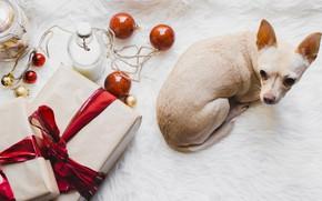 Картинка шары, игрушки, новый год, щенок, подорок