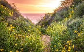 Картинка пейзаж, закат, цветы