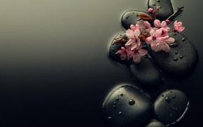 Картинка вода, капли, цветы, камни, ветка, сакура