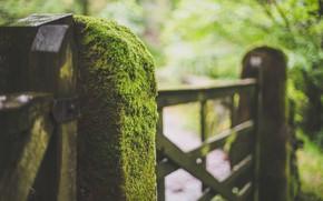 Картинка мох, столб, калитка