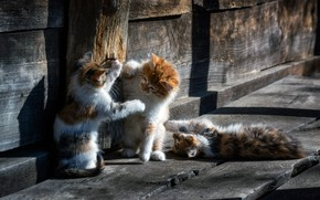 Картинка wood, animal, cats, cute, situation, playing, paws, fur, ears, whiskers, feline, Kittens, snouts