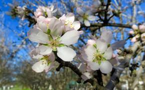 Картинка цветы, дерево, весна