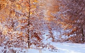 Картинка листья, снег, солнечный свет