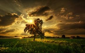 Обои поле, лучи, тучи, солнце, дерево