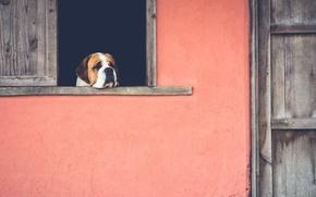 Обои грусть, дом, собака, окно, ностальгия