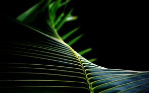 Картинка лист, пальма, фон, черный