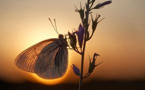 Картинка солнце, макро, бабочка, ветка, вечер, боке