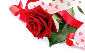 Картинка роза, лента, красная