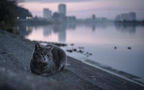 Обои город, лестница, вечер, кошка