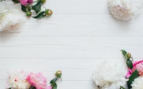 Картинка Цветы, Весна, Бутоны, Пионы, Деревянный фон