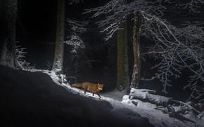 Картинка зима, лес, снег, горы, Швейцария, лиса, лисица, Юра
