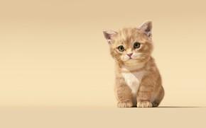 Обои детская, Sanhanat Suwanwised, малыш, арт, котёнок, Cat