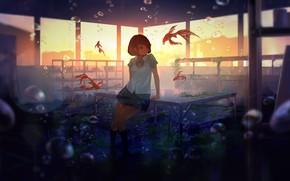 Картинка рыбки, водоросли, закат, пузыри, стол, окна, класс, школьница, под водой