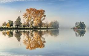 Картинка деревья, туман, озеро, отражение, воздушный шар