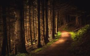 Картинка лес, тропа, Шотландия, Scotland