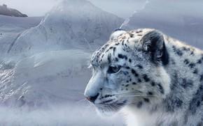 Обои хищник, ирбис, снег, снежный барс, морда, лёд