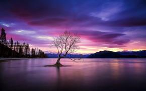 Картинка ночь, озеро, дерево