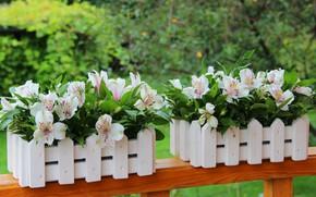 Картинка лето, цветы, красота, букет, декорация