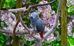 Картинка Цветы, Птичка, Попугай, Flowers, Bird