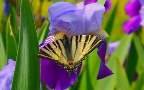 Картинка Макро, Цветы, Весна, Бабочка, Flowers, Spring, Macro, Butterfly