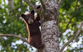 Картинка дерево, малыш, медвежонок
