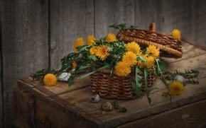 Картинка цветы, корзина, букет, натюрморт, одуванчики