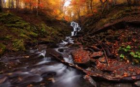 Картинка осень, листья, деревья, Украина, Карпаты, Закарпатье, горный водопад Шипот