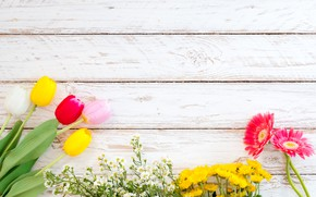 Картинка цветы, весна, colorful, тюльпаны, герберы, wood, flowers, tulips, spring, gerbera, tender