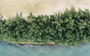 Картинка песок, море, пляж, пальмы, океан, побережье, Сингапур, курорт, вид сверху, Singapore, с высоты, с высоты …