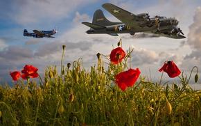 Обои цветы, небо, красные, алые, над полем, самолеты, полет, мак, маки, военные, маковое поле, летят, авиация, ...