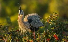 Картинка птица, рожки, цапля