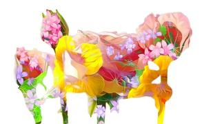Картинка линии, цветы, коллаж, краски, лепестки