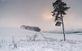 Картинка поле, снег, туман, дерево