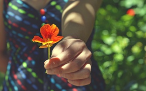 Картинка цветок, девушка, рука