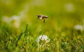 Картинка трава, макро, пчела