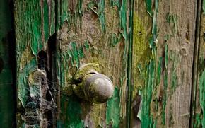 Обои дверь, паутина, фон