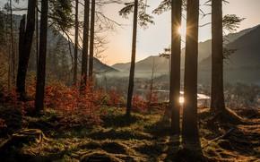 Картинка лес, деревья, природа, утро