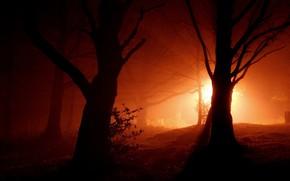 Картинка лес, свет, деревья, силуэт
