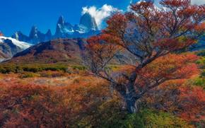 Картинка осень, деревья, горы, Аргентина, Санта-Крус
