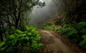 Обои лес, дорога, туман