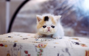 Картинка кошка, белый, кот, котенок, стол, фон, маленький, мордочка, милый, котёнок, скатерть, пятнистый, экстремал, залез, комочек, …