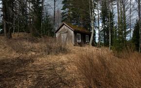 Картинка лес, природа, дом