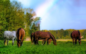 Картинка лошади, луг, пасутся