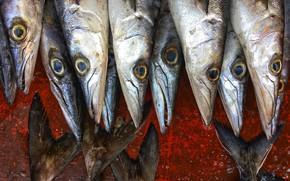 Картинка рыбы, фон, еда