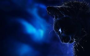 Картинка кот, усы, фон, фантазия, арт, профиль