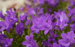 Картинка Purple flowers, Фиолетовые цветы, Боке, Flowers
