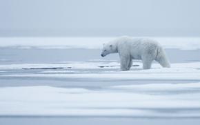 Картинка лед, зима, животные, белый, небо, снег, природа, туман, берег, один, лёд, ледник, медведь, мишка, дымка, …