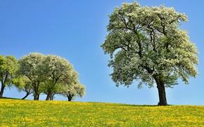 Картинка деревья, цветы, поляна, Природа, весна