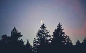 Картинка лес, деревья, луна